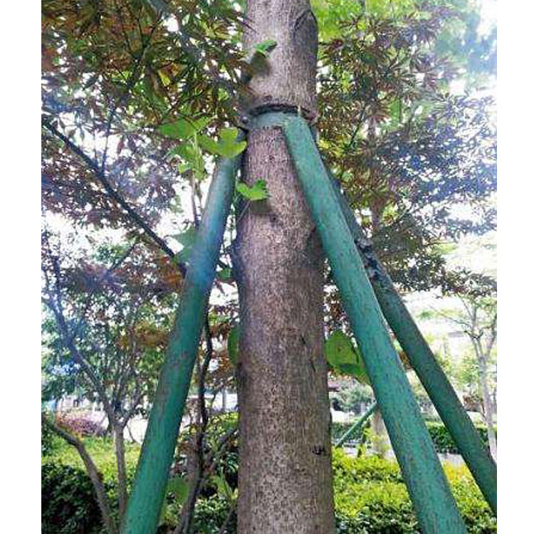 树木支撑架